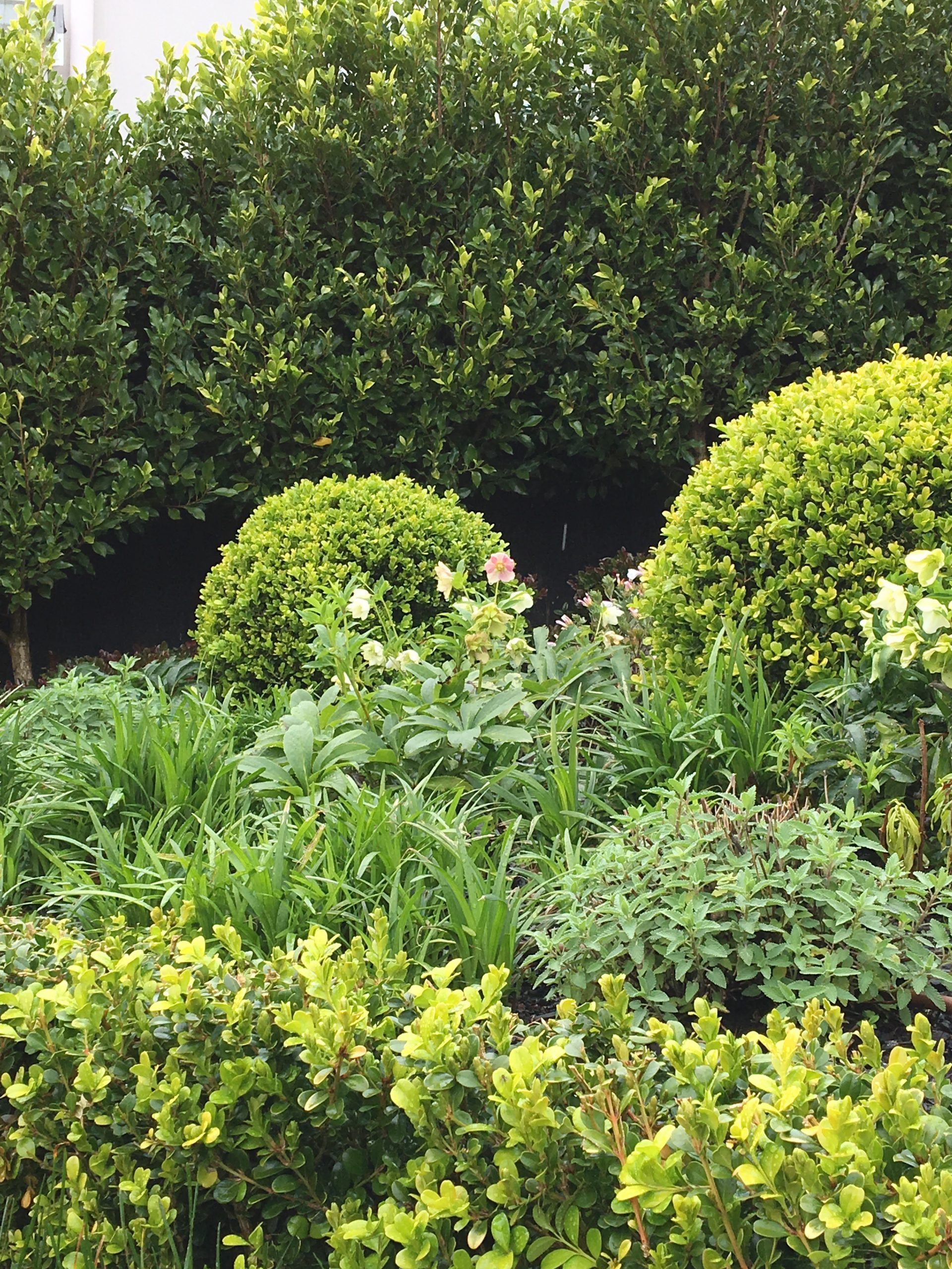 Landscaping IMG 4602